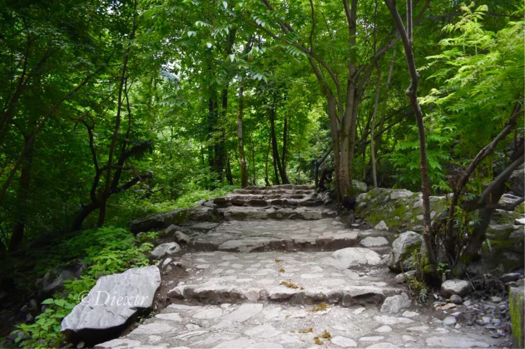 Steps Into The Green Canopy