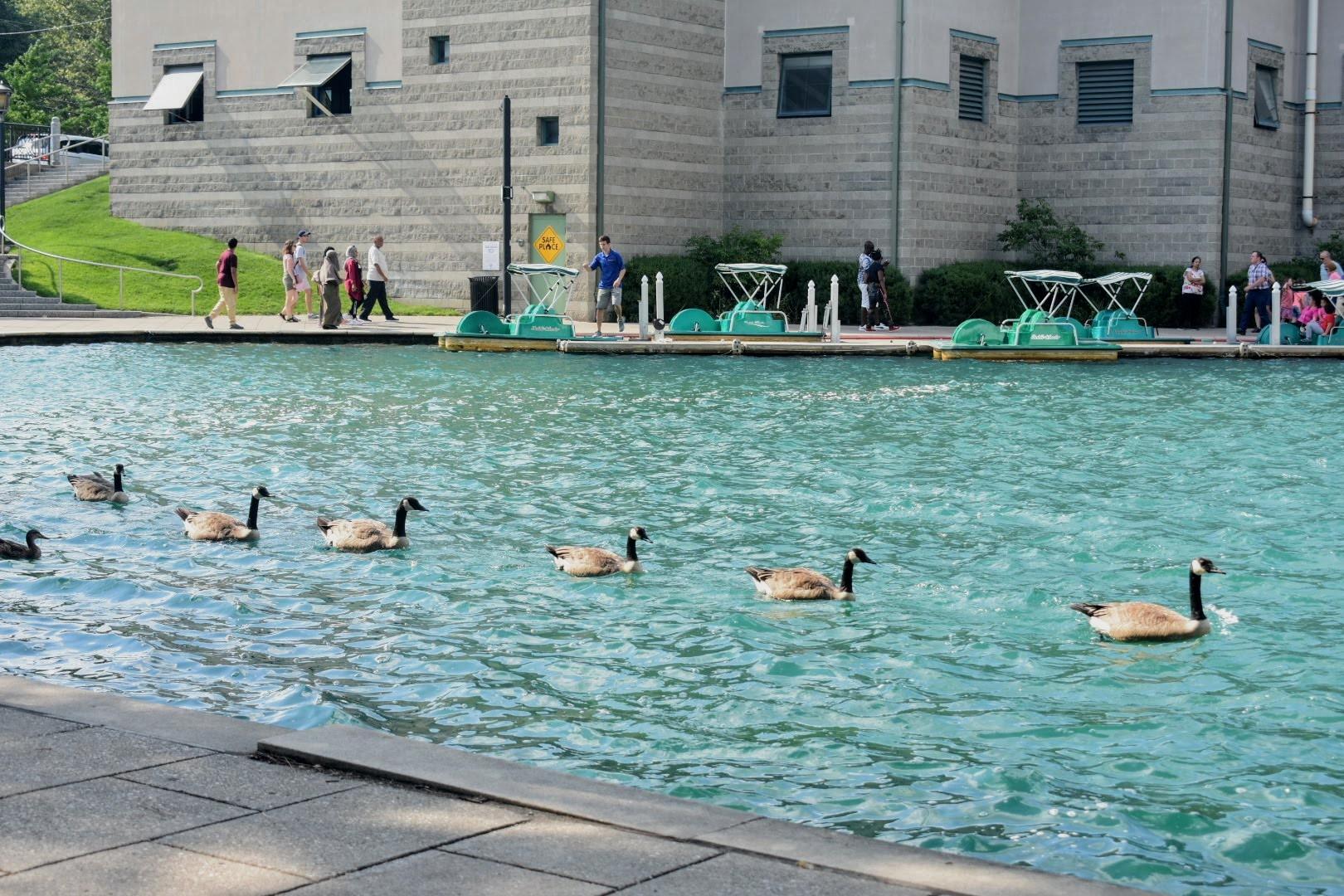 String of ducks